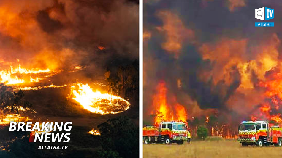 Australia fires destroy everything in their path. How can we help? Local's report | ALLATRA Climate