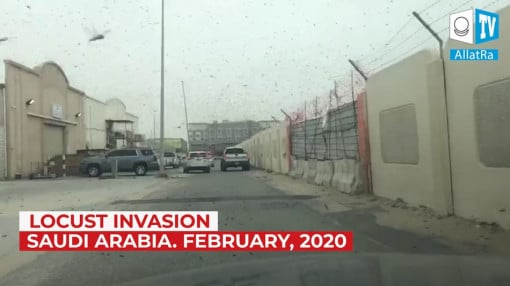 Climate. Eyewitness Report. Locust invasion in eastern Saudi Arabia. February 21, 2020.