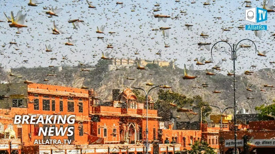 Locusts invasion! Floods → India, Central America. Large hail → the United States. Powerful storm →Russia